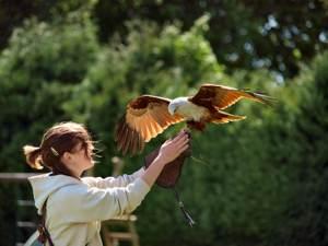Birdsdofprey